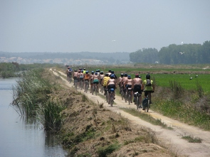 guided cycling tours in Portugal, rice fields