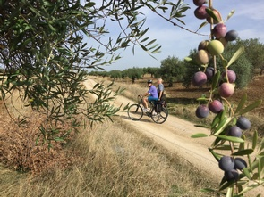 cycling in the olive groves