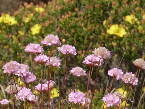 flowers in our algarve bike tours